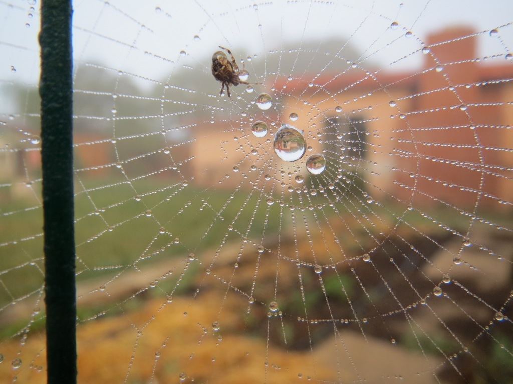 tiny spider web in fog