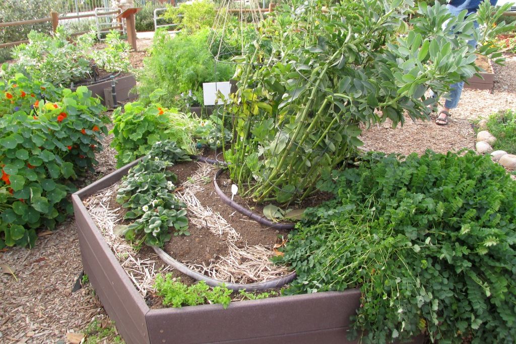 Concentric circles of herbs and strawberries.